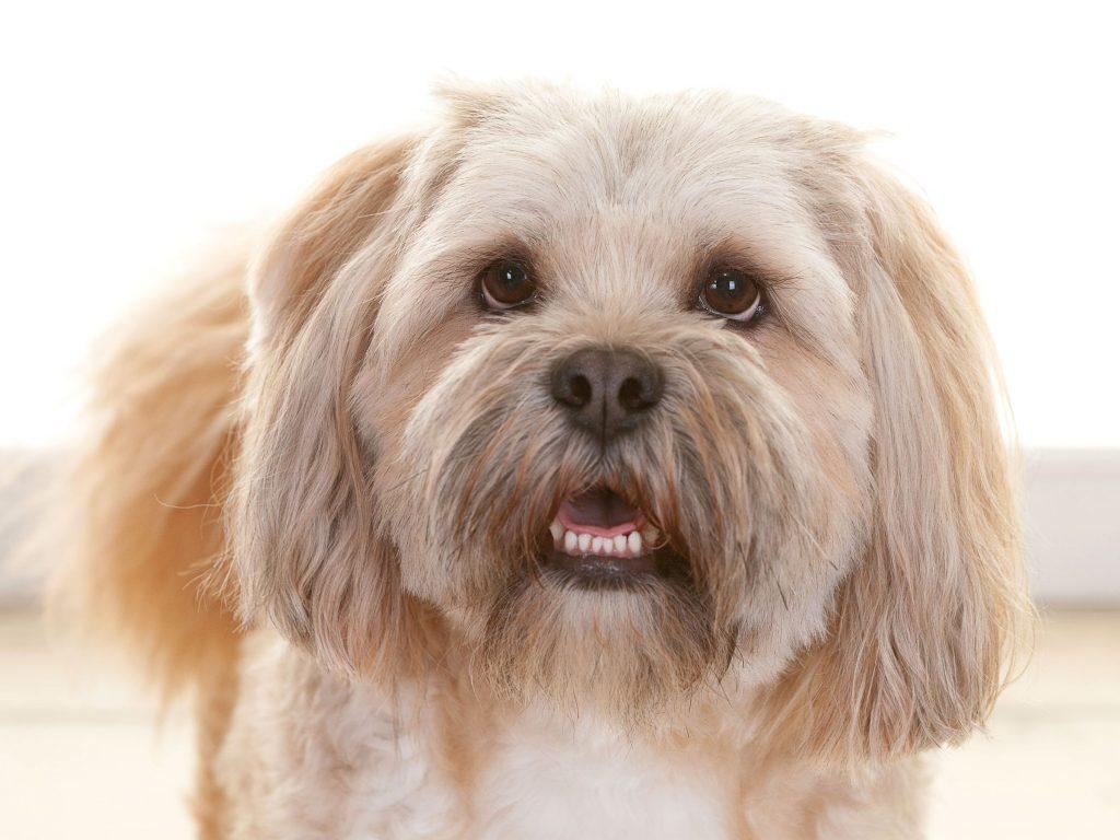 serious faced Barney dog