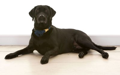 The Life of a Guide Dog