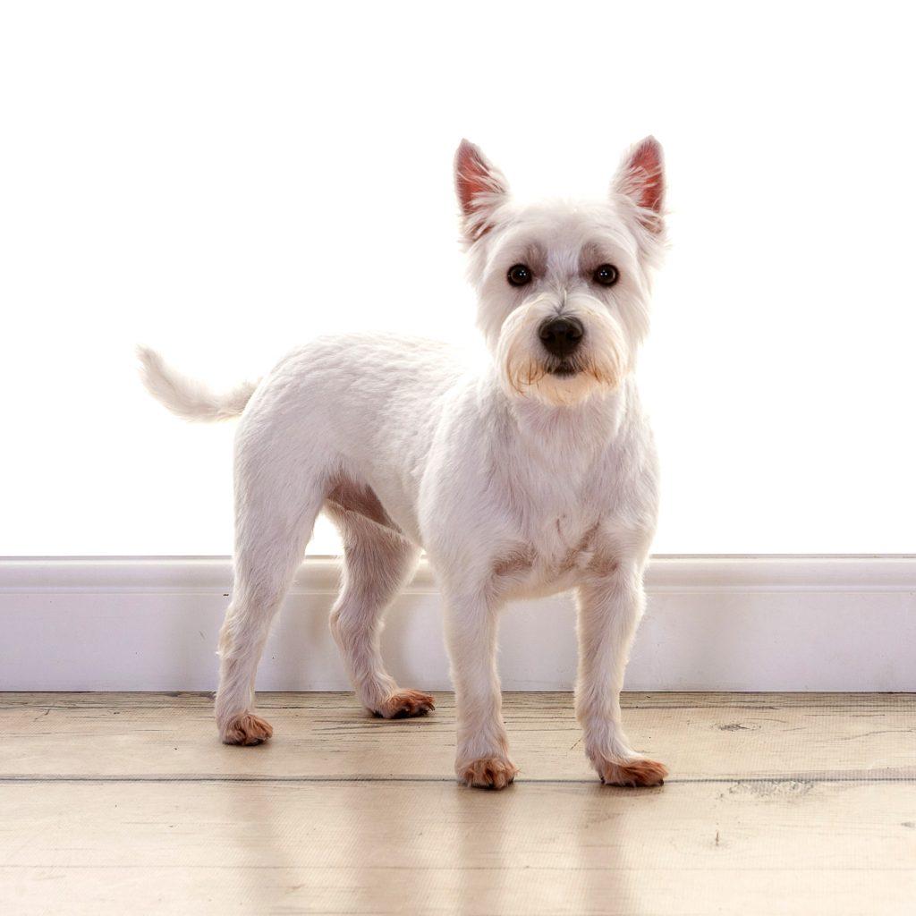 cute little dog photoshoot