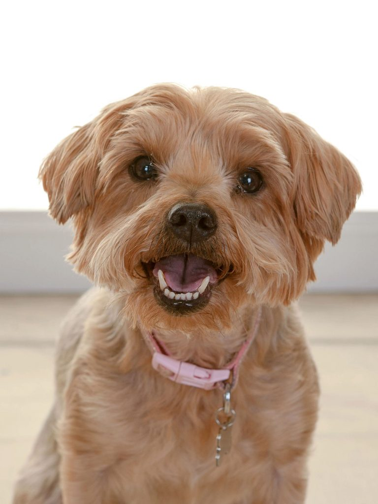 cute close-up of a small dog