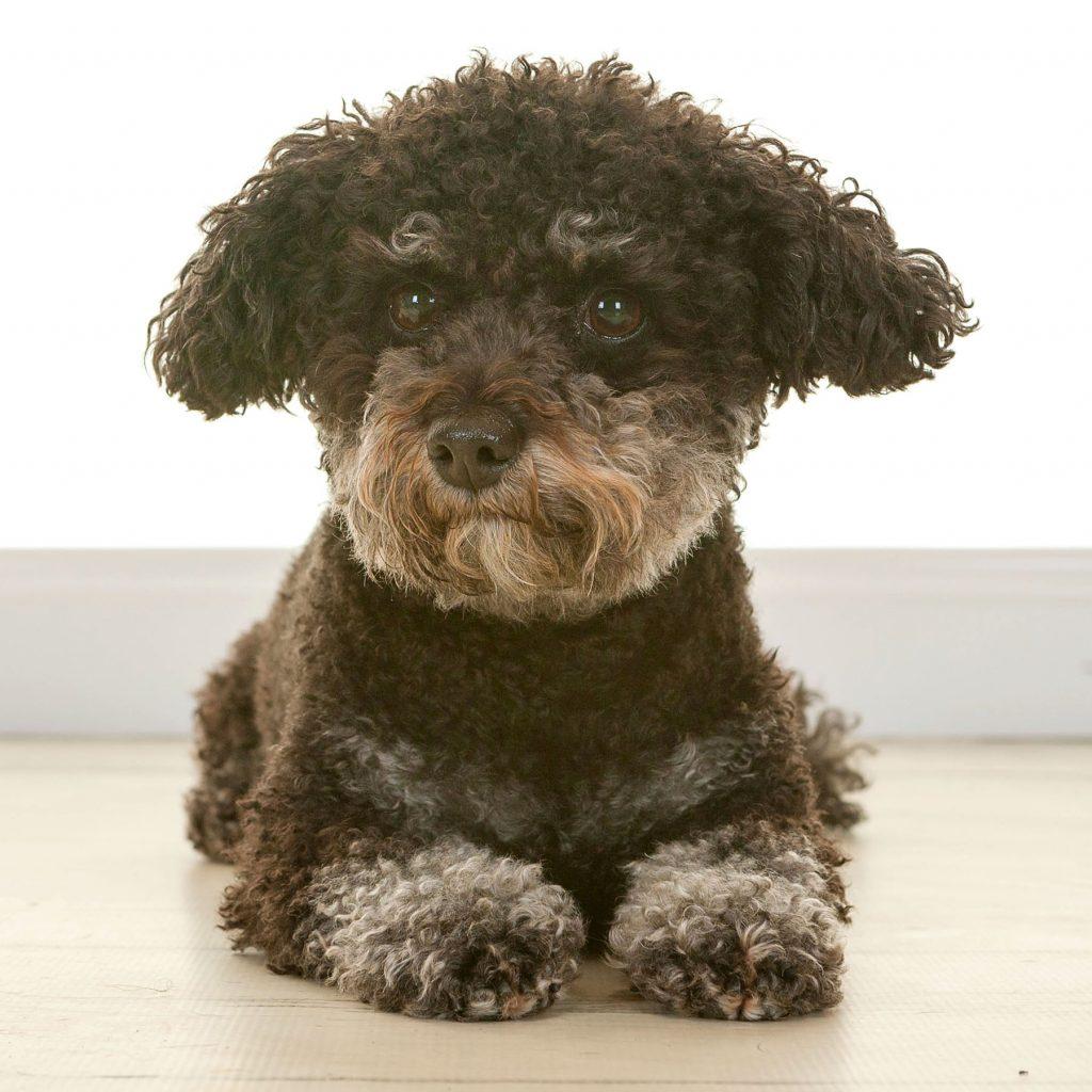 adorable small black dog