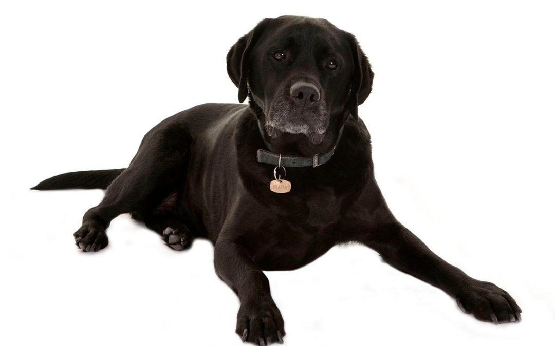 Why Guide Dogs For the Blind?