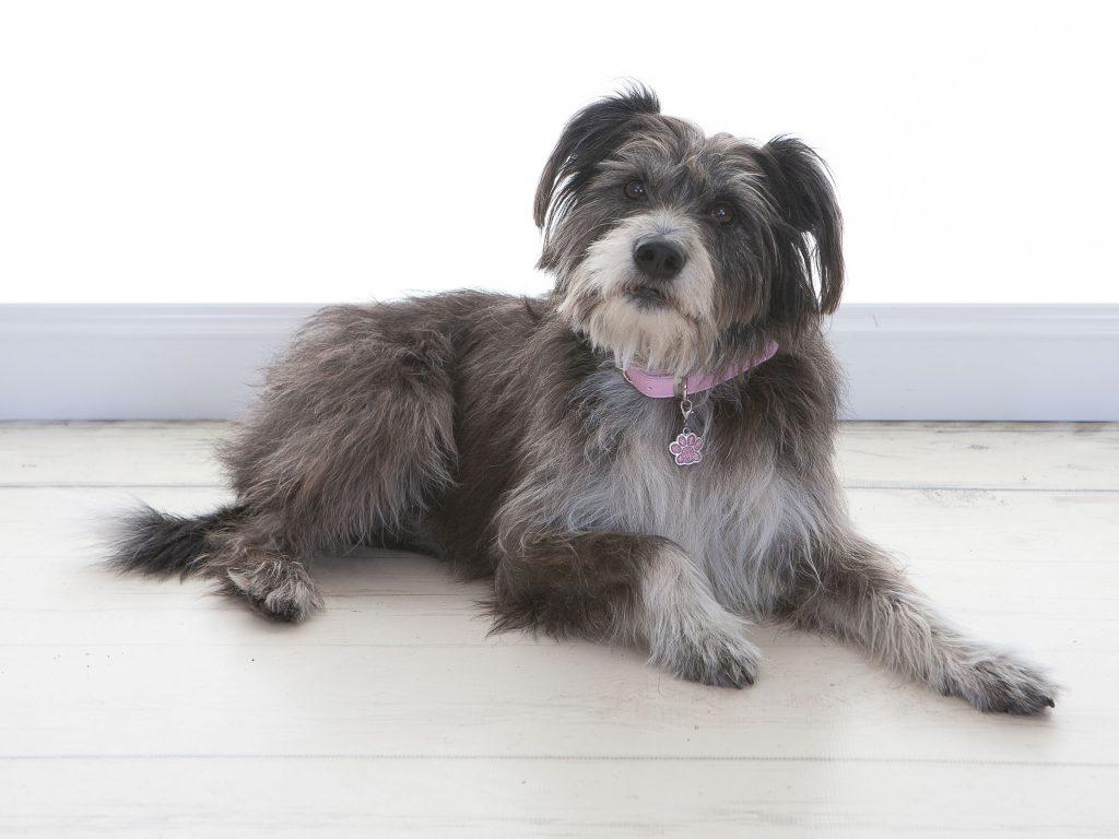 Lucy Smith shaggy coated dog lying on the floor