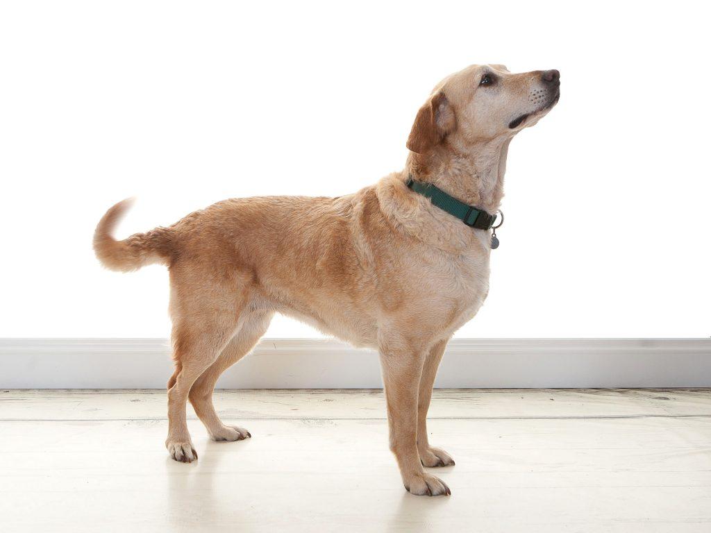 Sylvie Nuttall medium sized dog in a photo studio